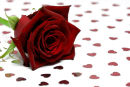 Rose with Hearts......
