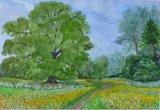 Buttercups in Long Meadow