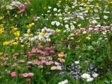 A colourful riot in the lawn