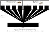 Grass lawn plant-pollinator web