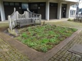 Newly planted grass-free lawn at the University of Reading