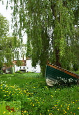 Boat and Buttercups