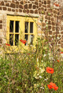 Poppies and Yellow Window