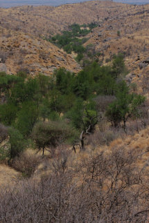 Watered Valley in Desert