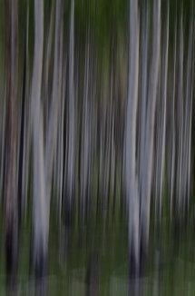 Slow Shutter Trees