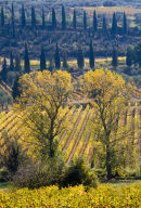 Shimmering in the Autumn Sunlight, Tuscany