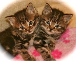 Kittens 3833
