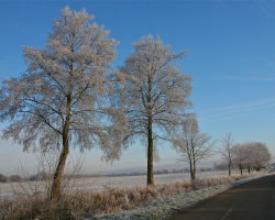 Winter frosts 1  6314