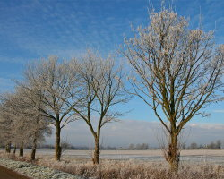 Winter frosts 2  6325