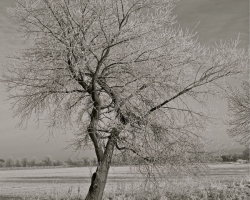 Winter Frosts 4  6327a