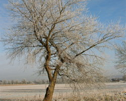 Winter Frosts 3  6327