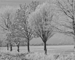 Winter frosts 6  6328a