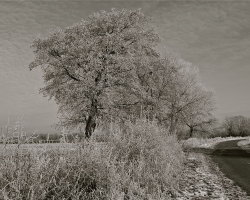 Winter frosts 8  6335a