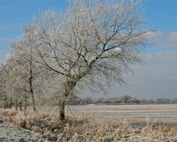 Winter frosts 12  6339