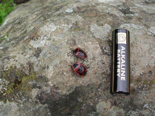 unidentified beetles