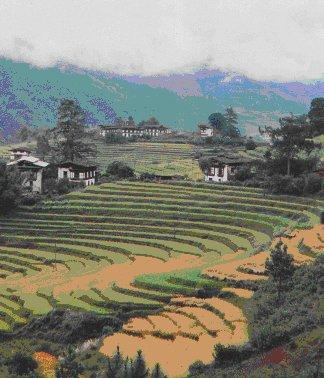 Bhutan terraces