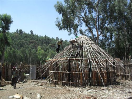 building the roof