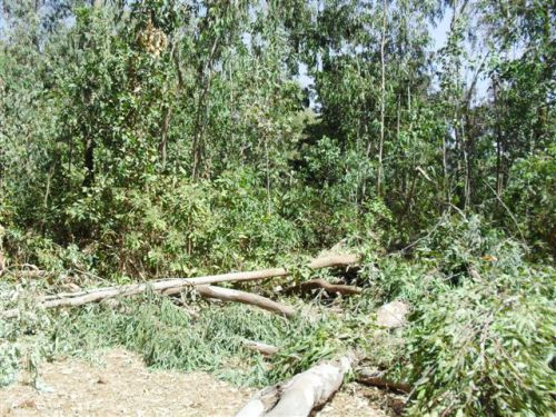 clearing Lot 1