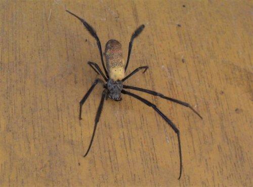 an unidentified species of spider