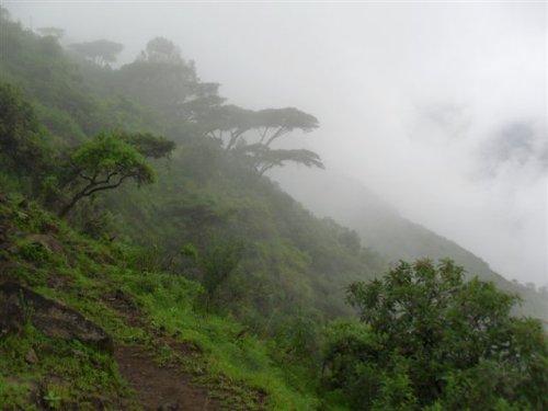 the footpath up the escarpment