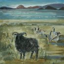 Hebridean sheep and canada geese