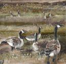 Geese Watching acrylic on board 20cm x 20cm