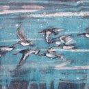 Oystercatcher flock