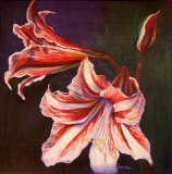 Red and White Amaryllis Macro Painting