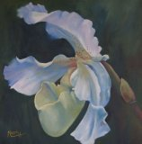 White Slipper Orchid in oils