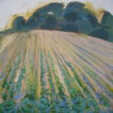 Field of  cabbages - SOLD