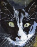 Abi's cat