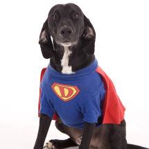 Dave the super dog