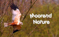 MOOREND NATURE