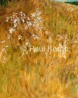 Autumn Meadow, Lincolnshire Wolds