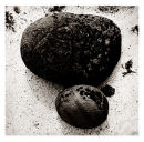 Two Stones On A Shell Beach - 1989