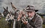 The Donkey Trader