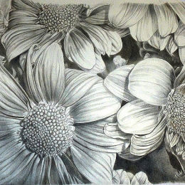 Daisy Group 2:Drawing on prepared paper in silverpoint and goldpoint