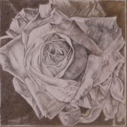 Rose, Gold and Silverpoint Drawing