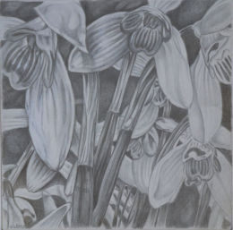 Snowdrops, gold and silverpoint drawing