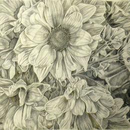 Daisy Group:Drawing on prepared paper in silverpoint and goldpoint