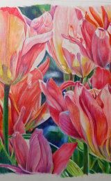 Tulips, pencil