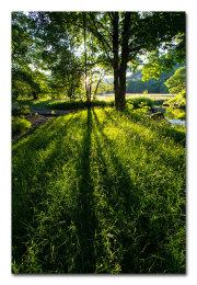 Easedale Woodland