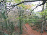 Harpford Woods near Sidmouth