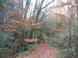 Harpford Woods near Sidmouth (6)