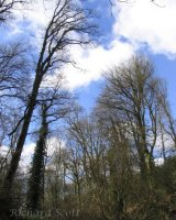 Harpford Woods near Sidmouth (2)