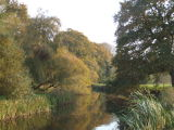 The River Otter in autumn