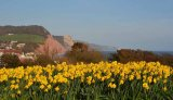 Sidmouth spring