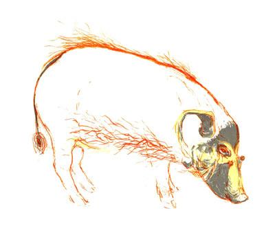 Red Hog