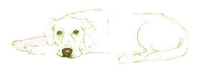 Dog in Plaster