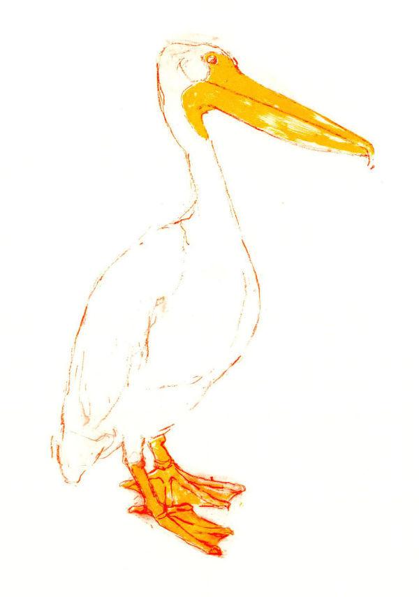 Pelican Starboard